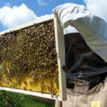 Už druhý rok je 20. máj Svetovým dňom včiel.