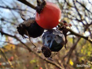 makro fotografia OnePlus 8T