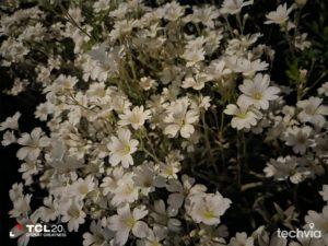 nočná fotografia TCL 20L